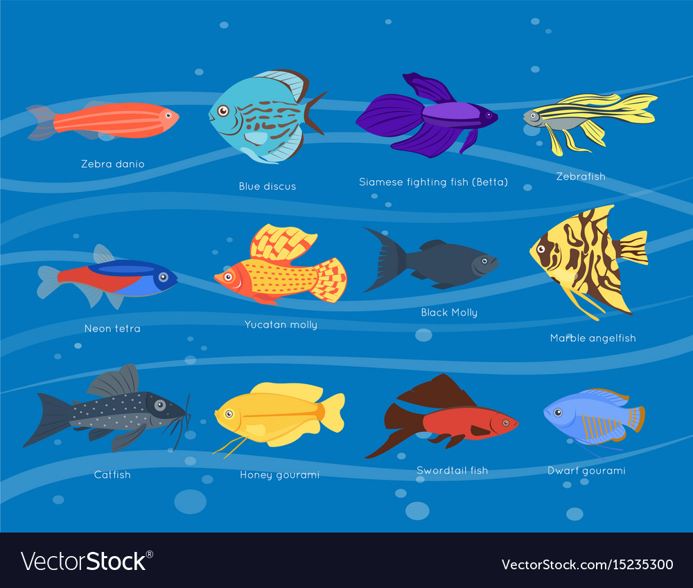 Exotic tropical fish different colors underwater