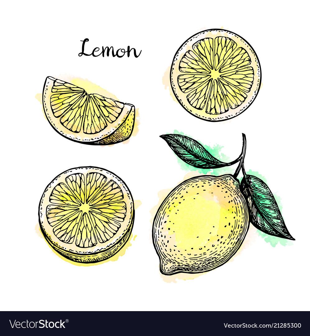 Sketch of lemon