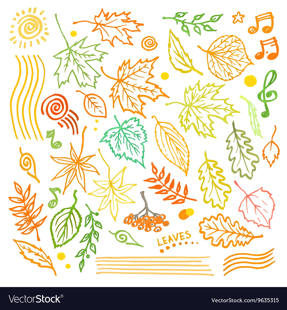 Colorful floral collection with leaves and vector image