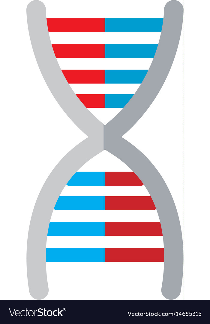 Dna medical molecule biology image vector image