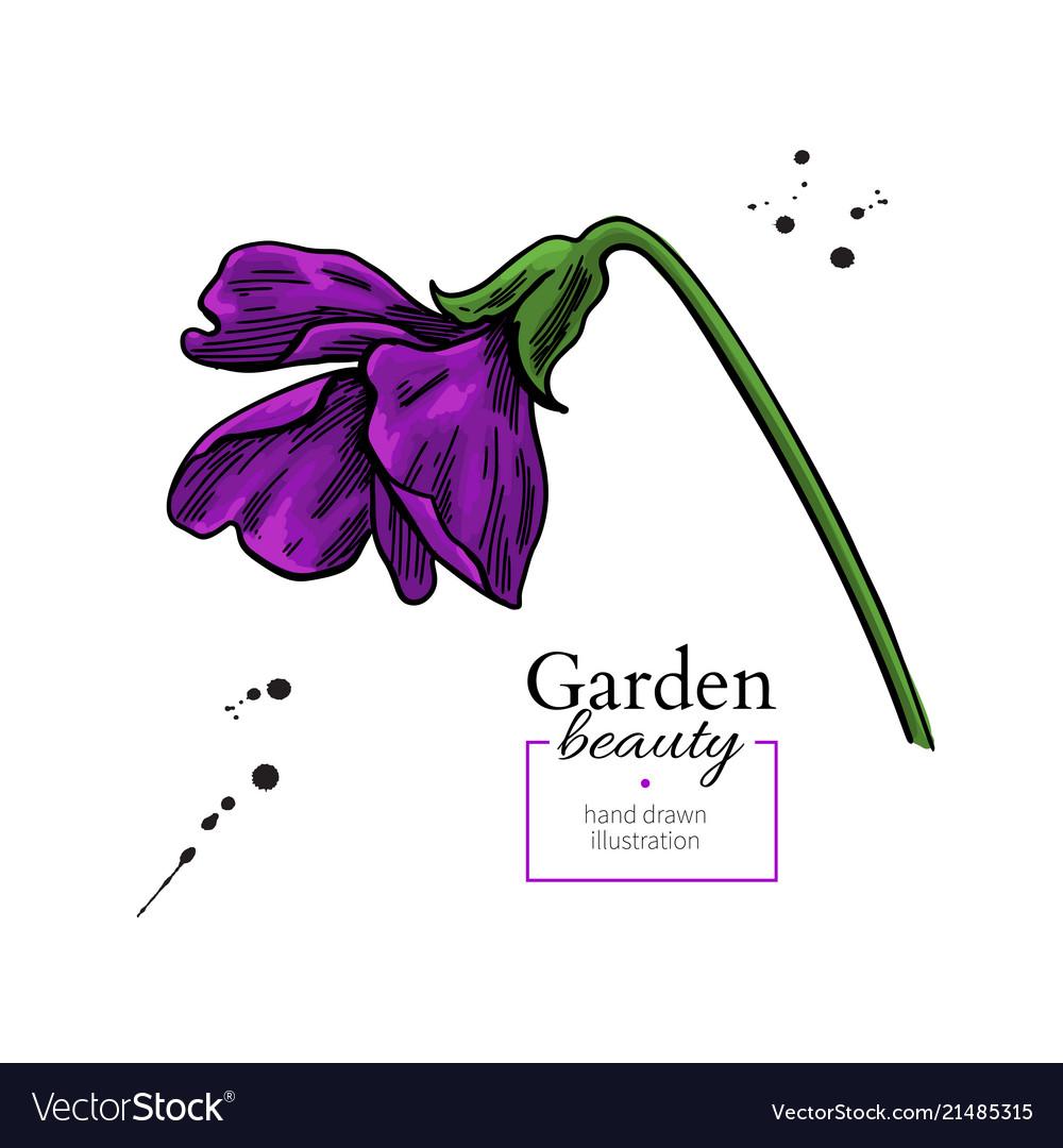 Violet flower drawing hand drawn floral