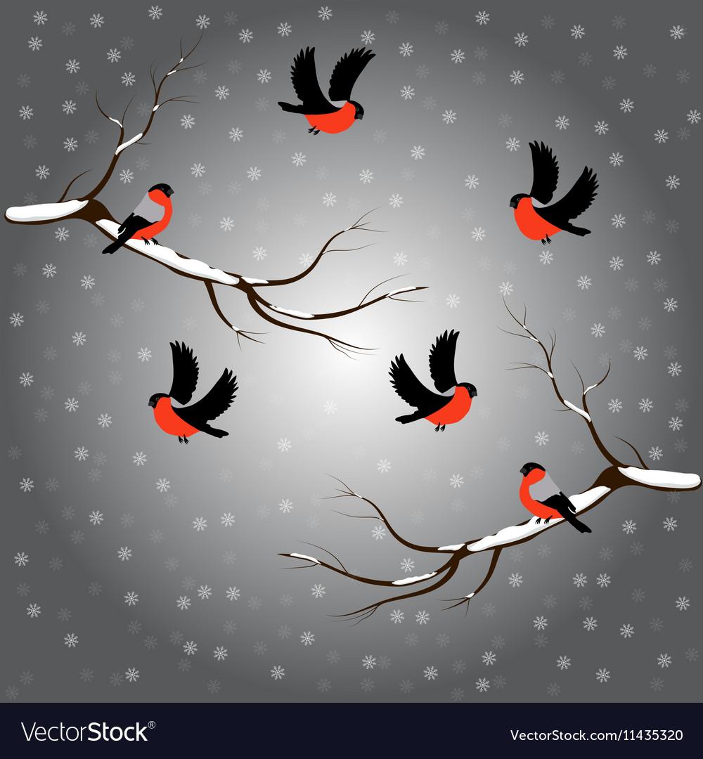 Bullfinch on branch snow merry christmas gray