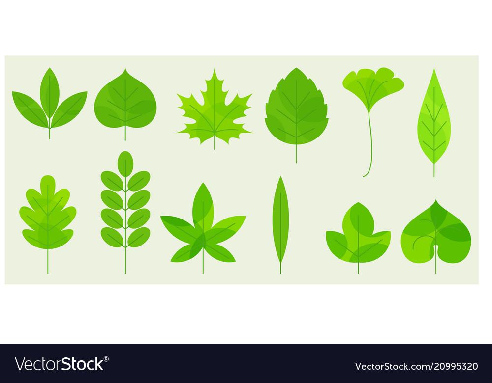 Fresh leaves icons