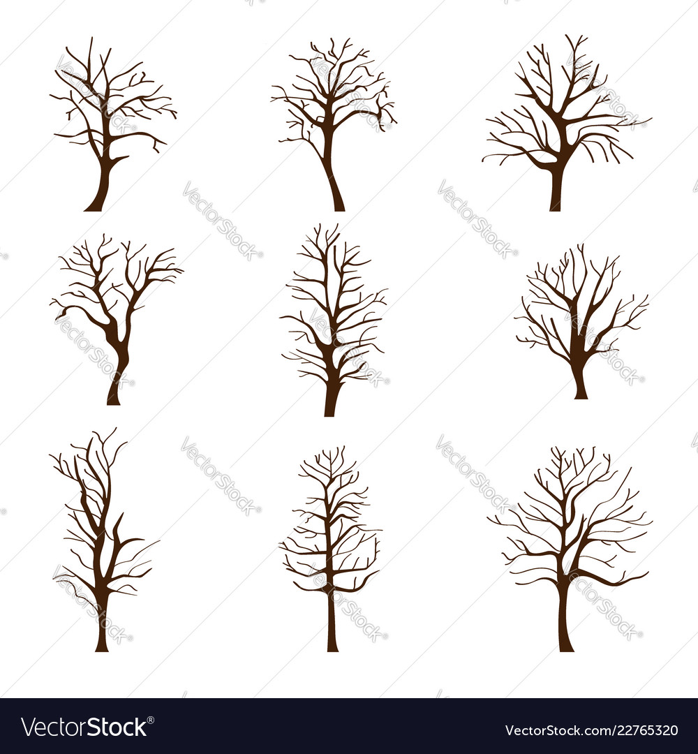 Set different trees without leaves in autumn or