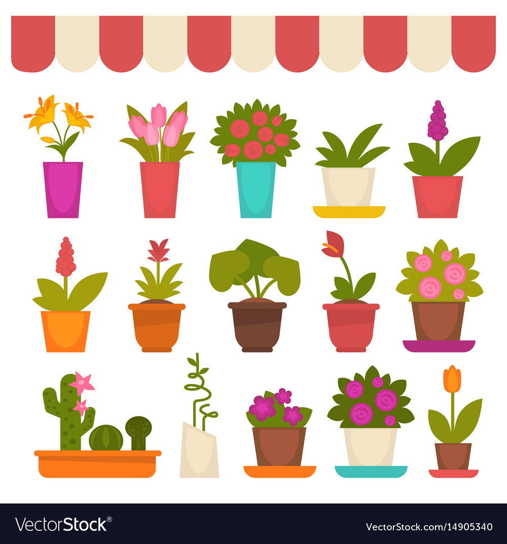 Different flowers in shop vector image