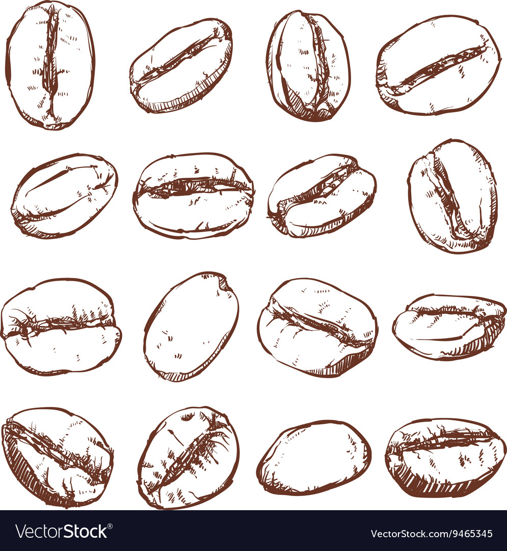Coffee bean Isolated Hand drawn