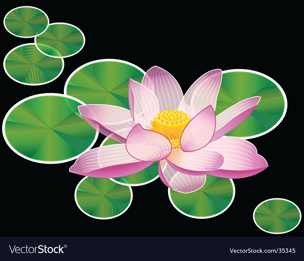 Water Lily Or Lotus Flower Royalty Free Vector Image