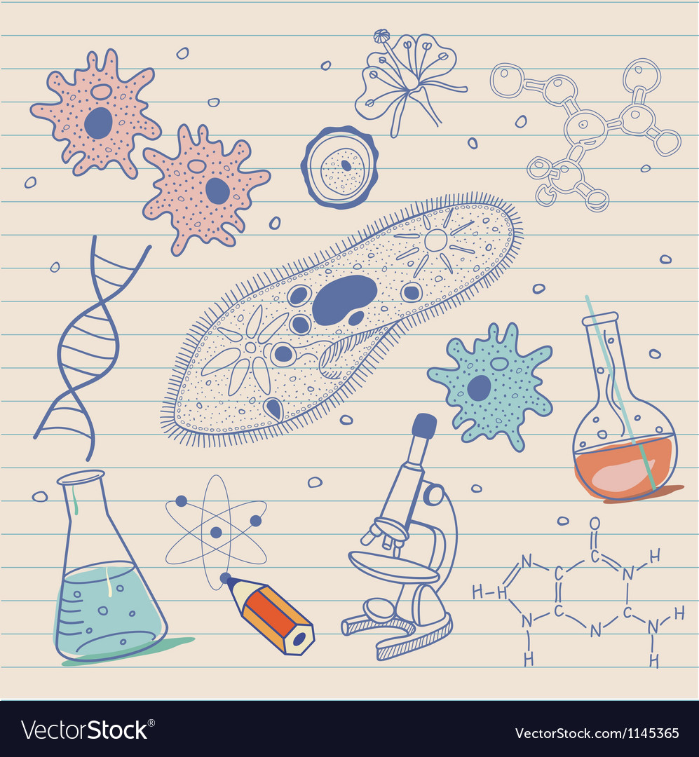 Biology sketches background in vintage style vector image
