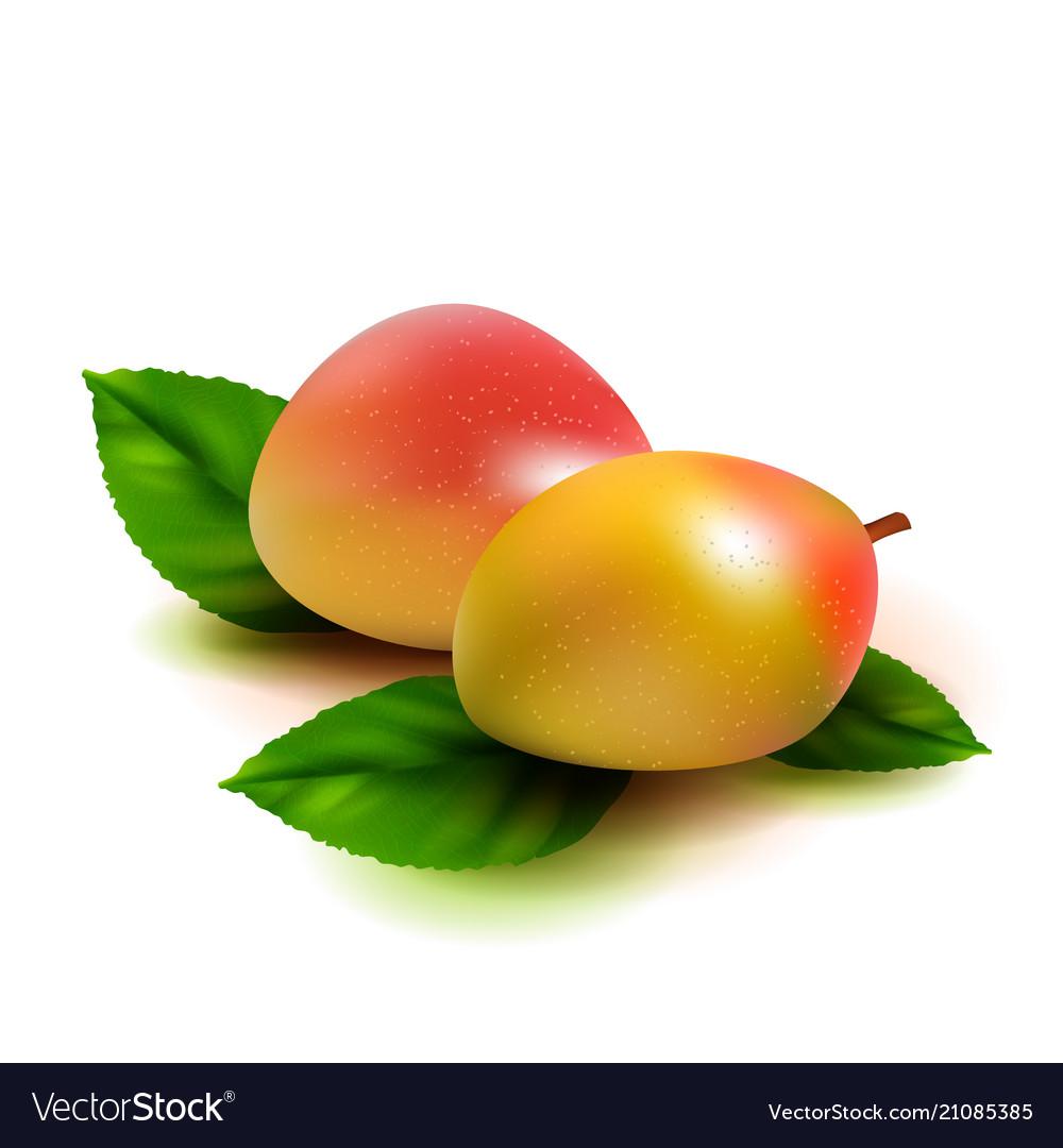 Realistic mango fruit with leaves isolated on