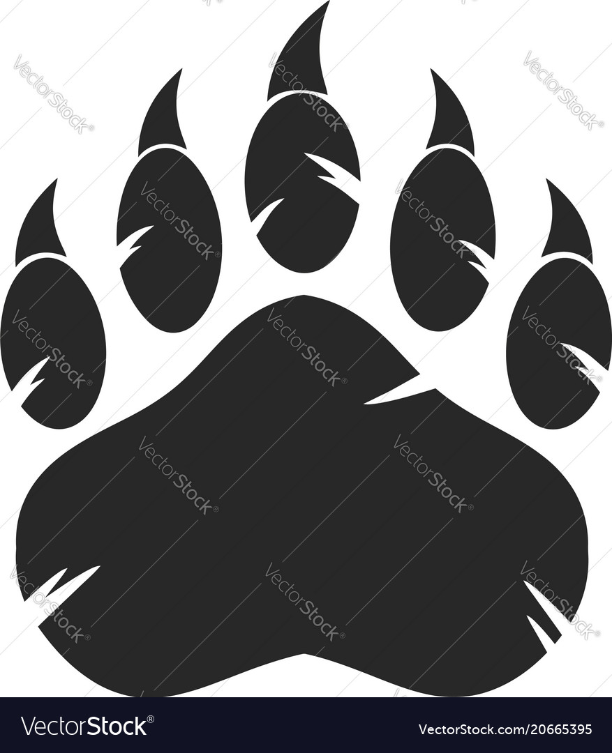 Black bear paw with claws