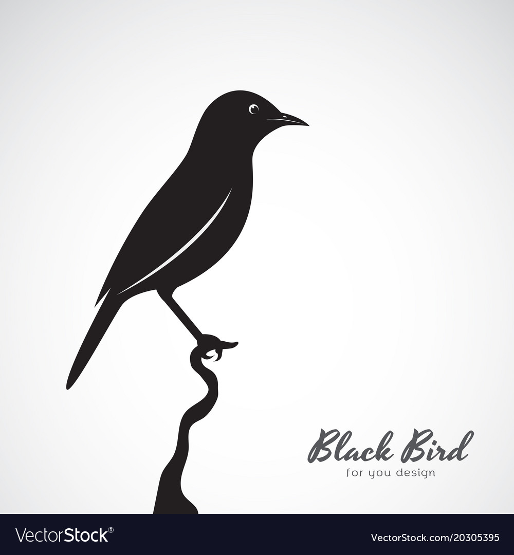 Black bird on white background animal easy