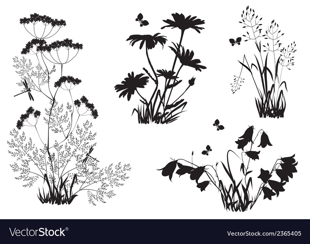 Silhouettes flowers and herbs