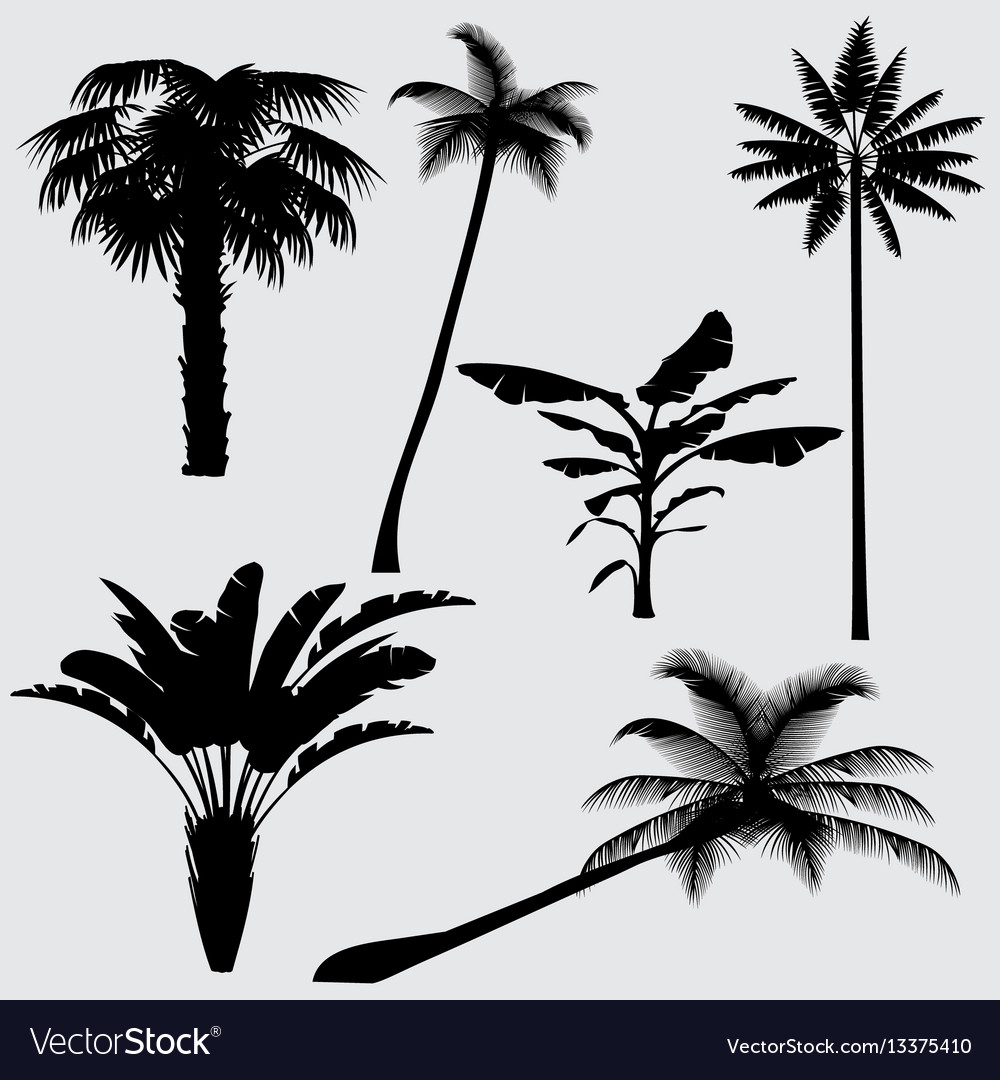 Tropical palm tree silhouettes isolated on