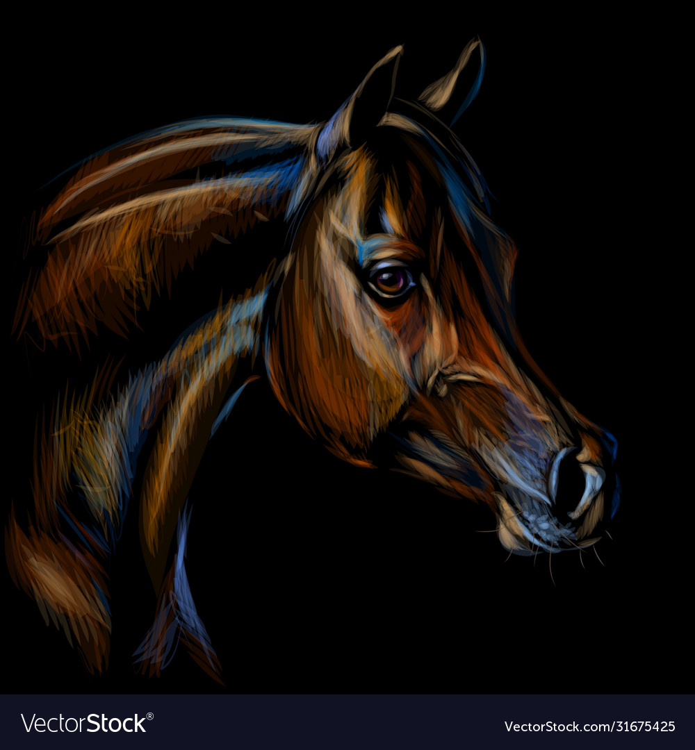Portrait An Arab Horse Color Realistic Drawing Vector Image