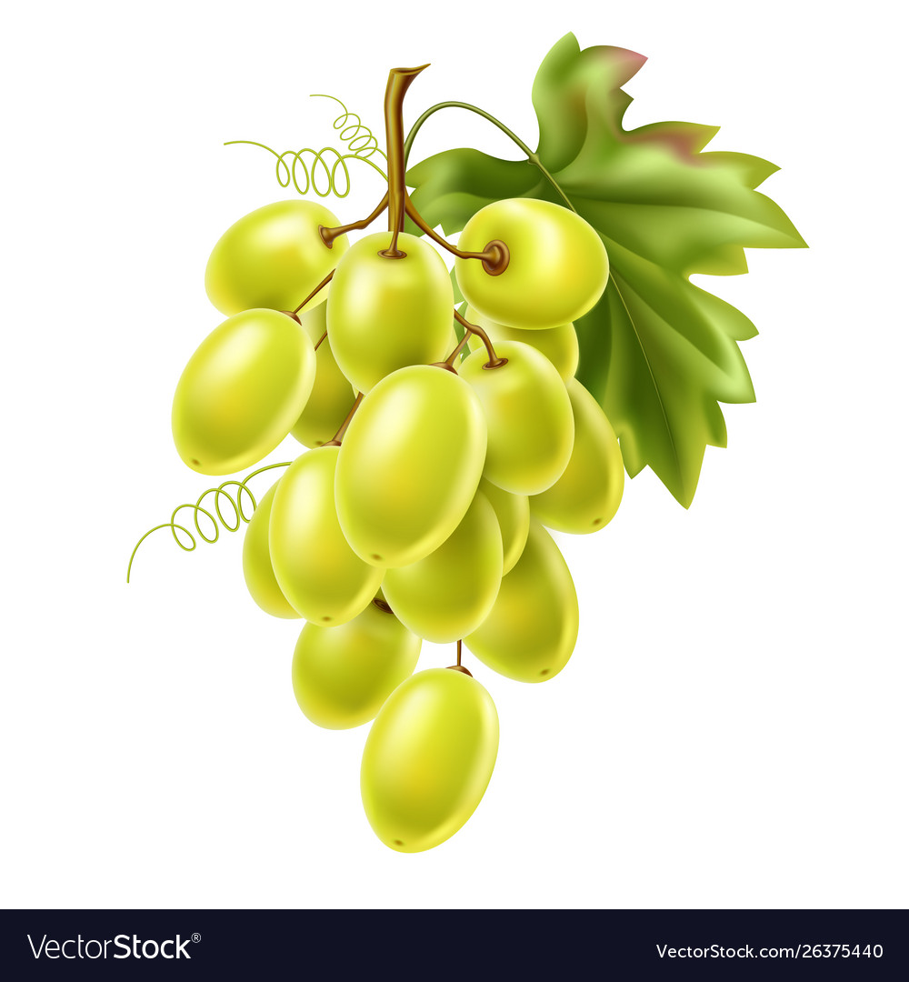 Red grape bunch with ripe berry and leaf