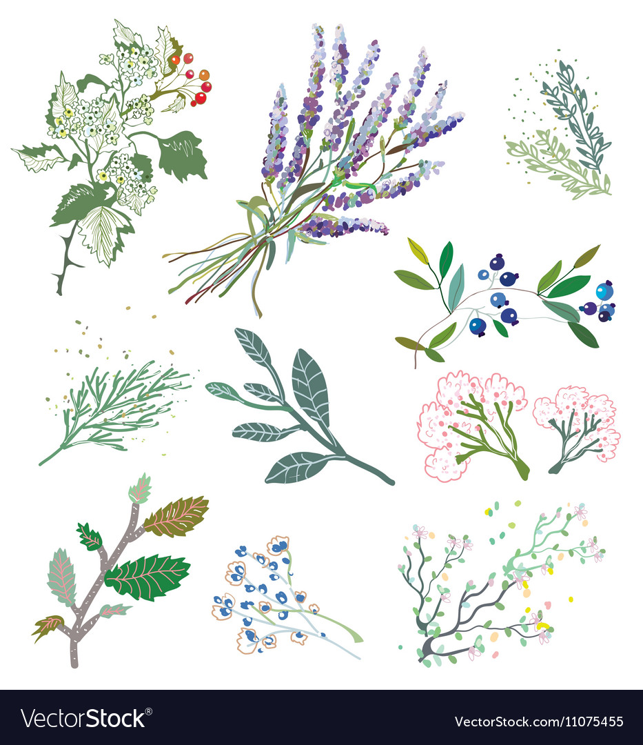Herbs and plants for herbal medicine