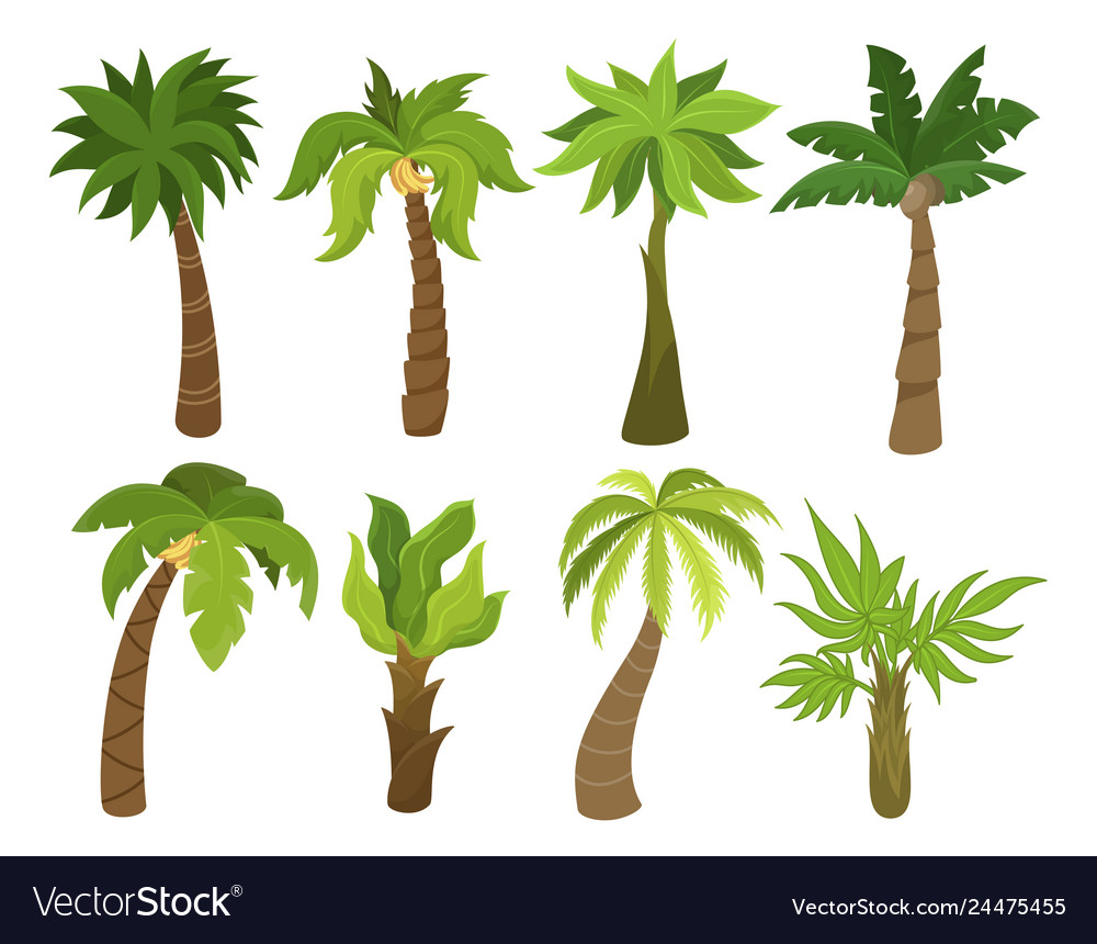 Tropical palm trees set beach and nature concept