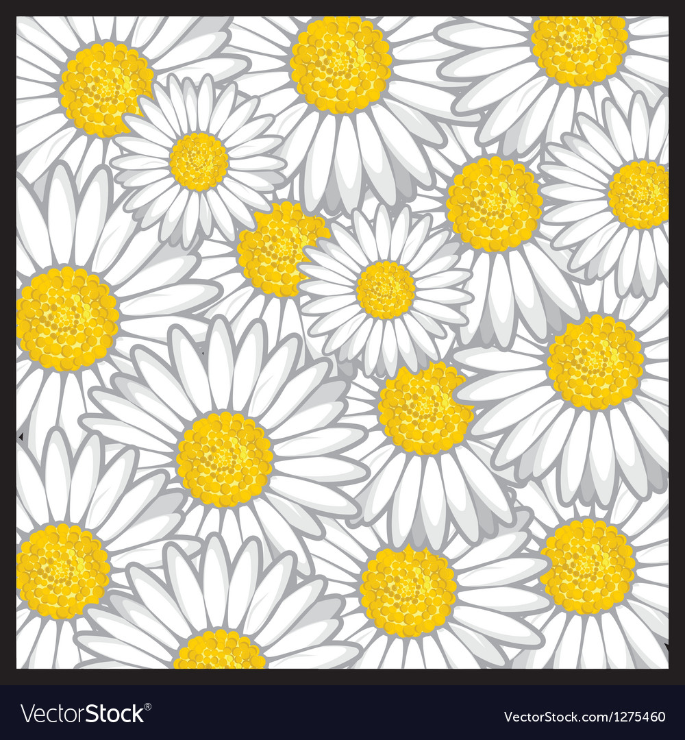 Daisy Flower Pattern Royalty Free Vector Image