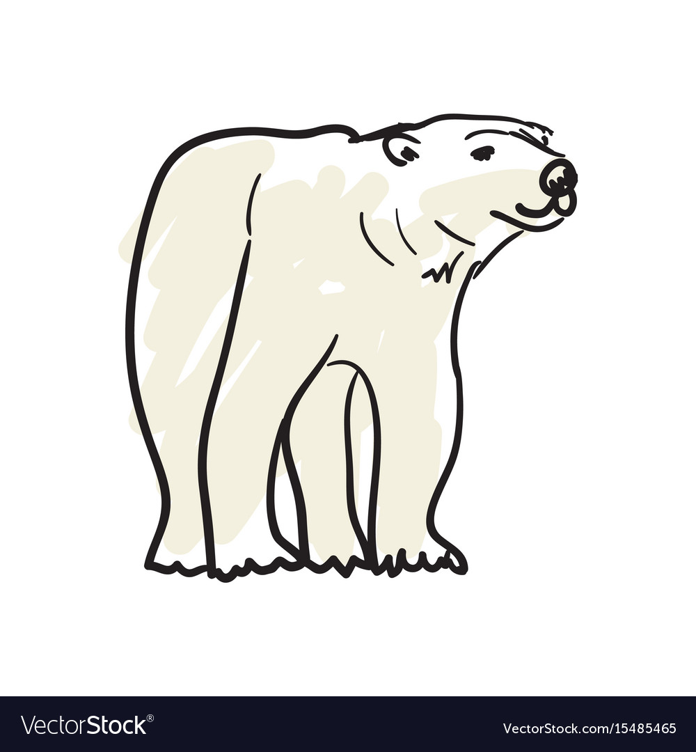 White bear hand drawn isolated icon