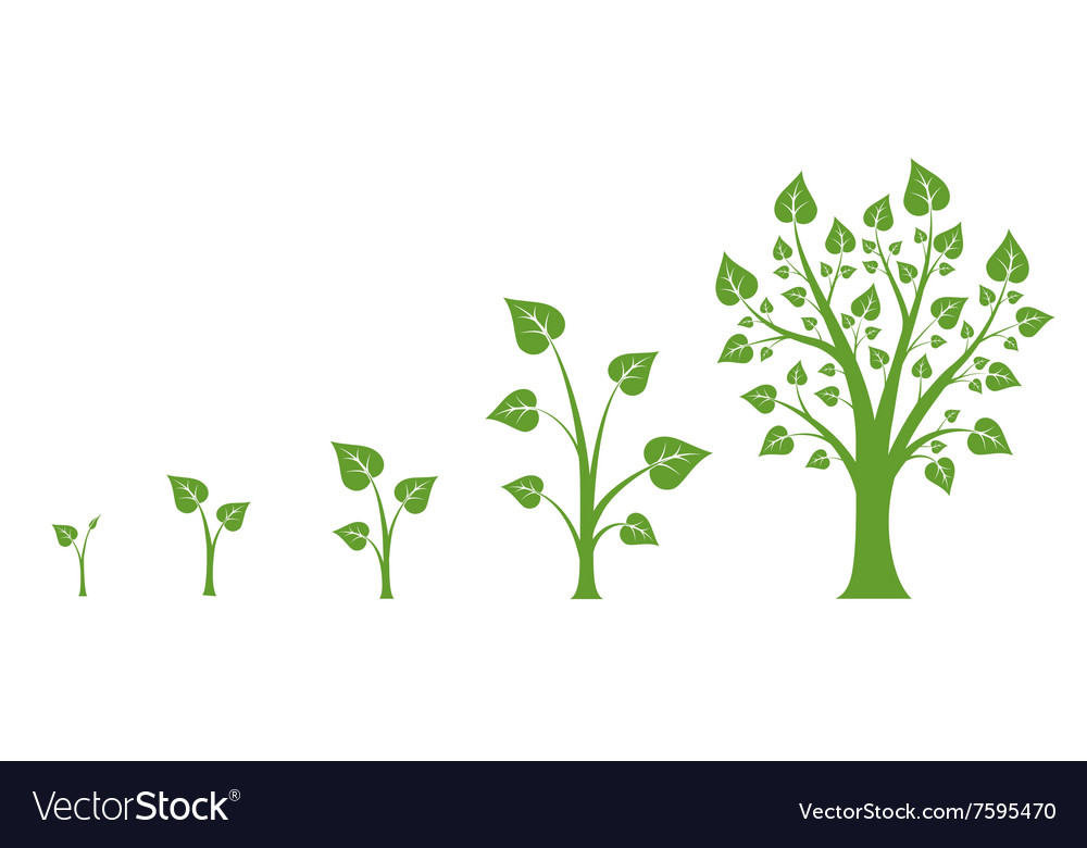 tree growth diagram vector image