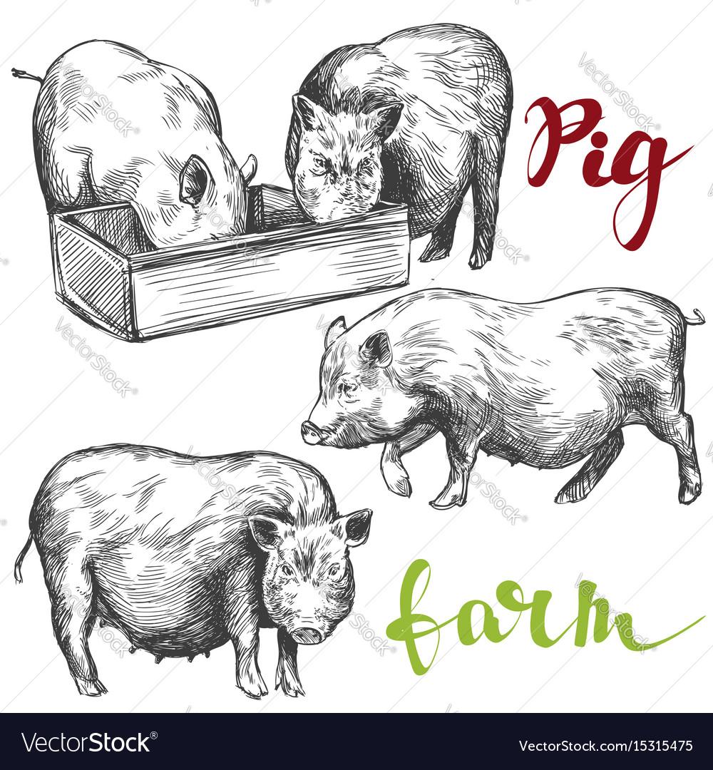 Farm pig set hand drawn