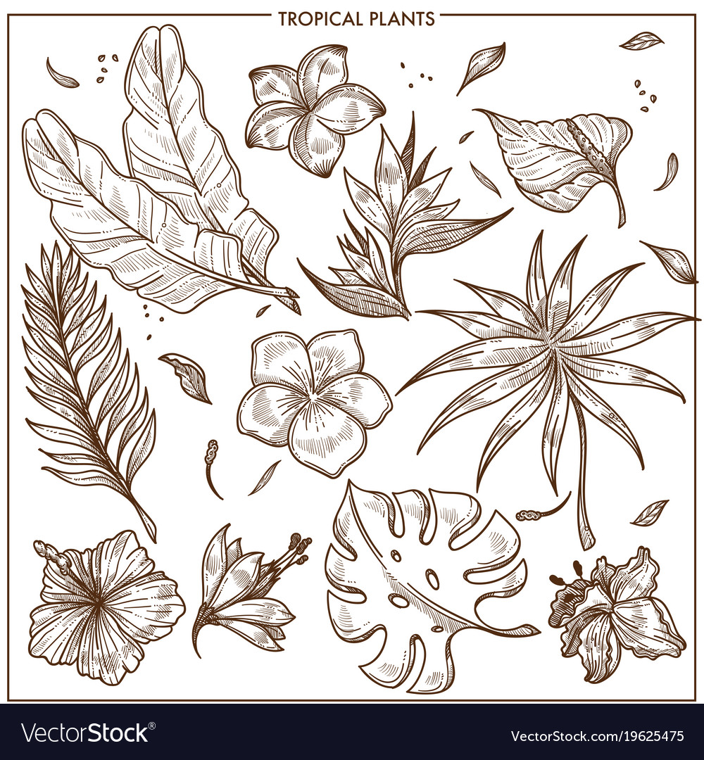 Tropical plants and exotic flowers sketch