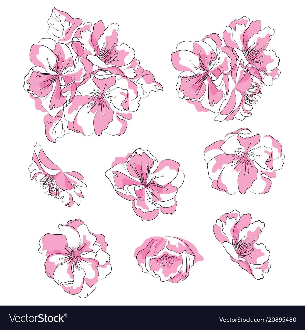 Set cherry blossoms collection pink sakura