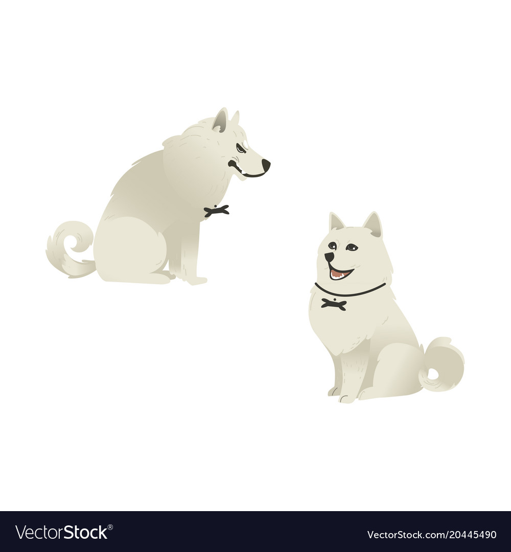 Set of sitting white fluffy dogs with different