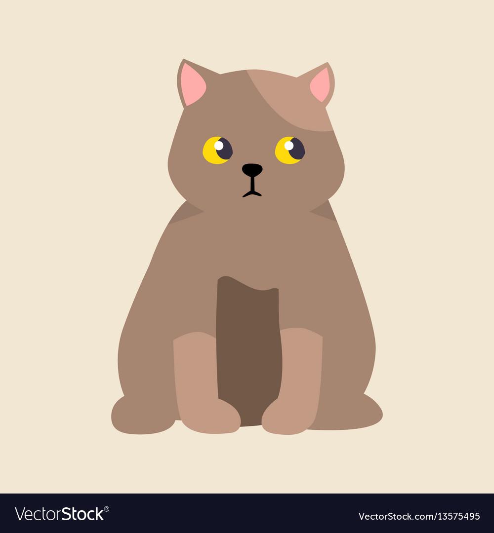 Cat breed british shorthair cute pet portrait