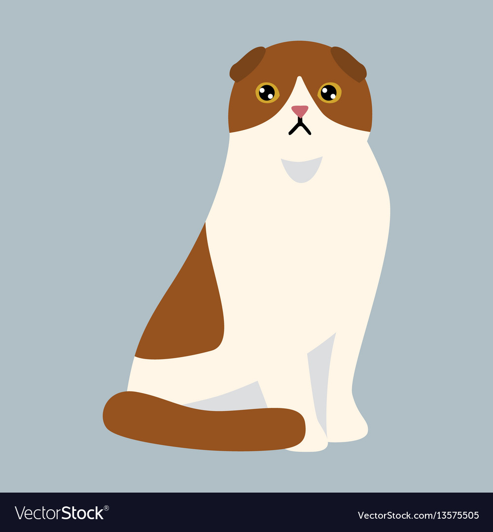Cat breed british shorthair cute pet white red