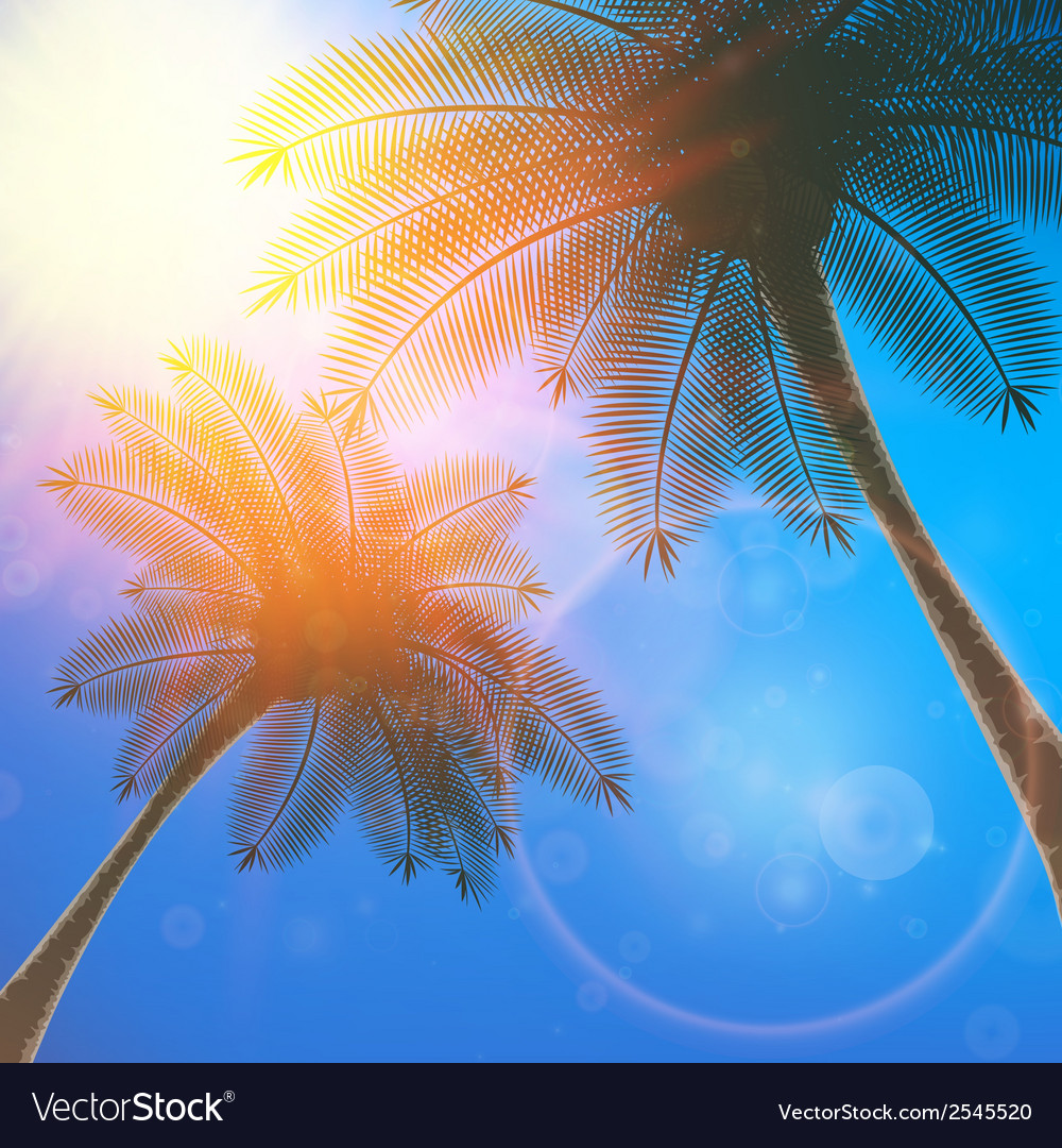 Palm trees and sun in sky