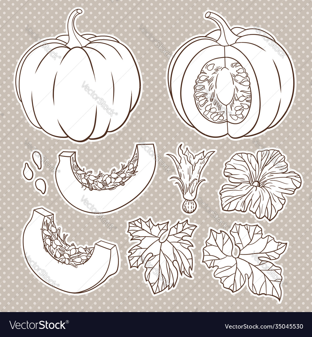Botanical set with isolated pumpkins flowers and