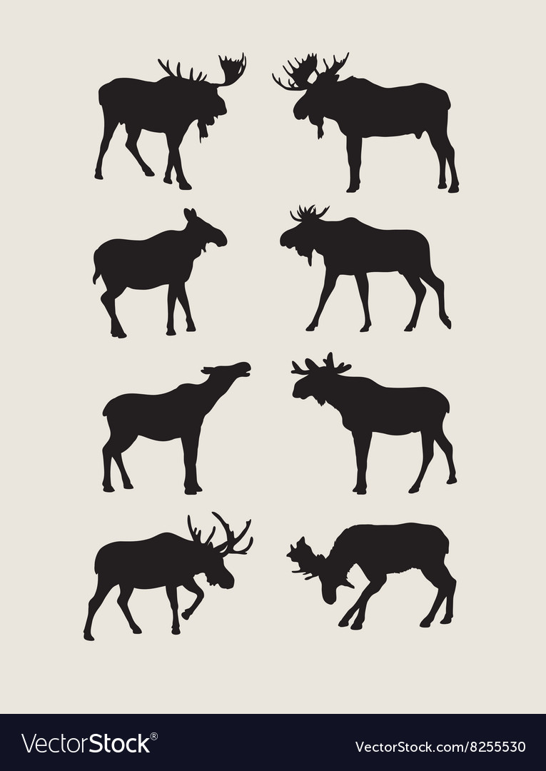 Bull Moose Silhouettes vector image