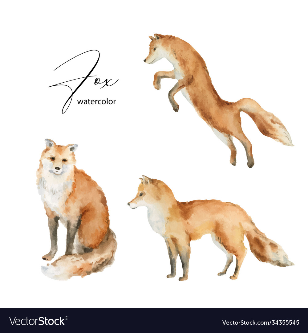 Watercolor set fox isolated on a white
