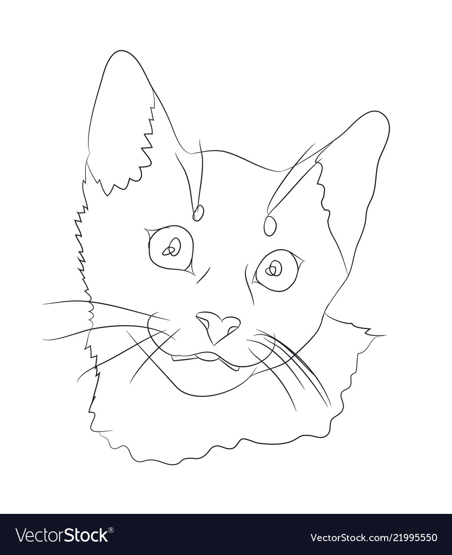 Cat portrait lines