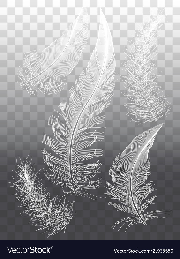 White feathers set graphic design elements
