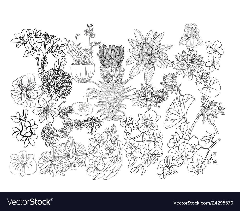 Hand drawn botacal floral design elements