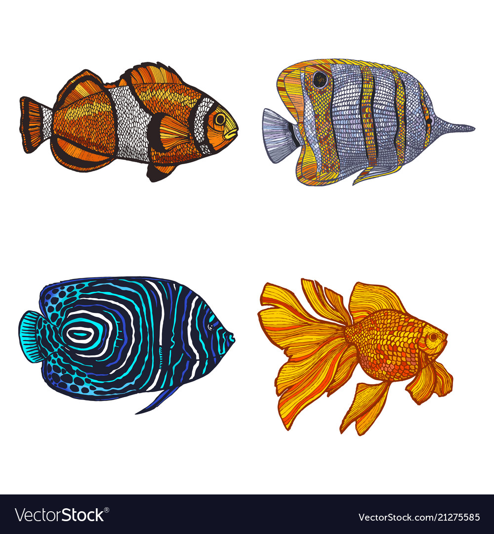 Colored set of fish in hand-drawn style