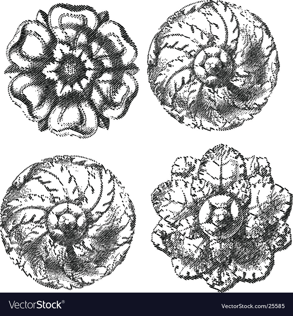 engraved circle ornaments royalty free vector image
