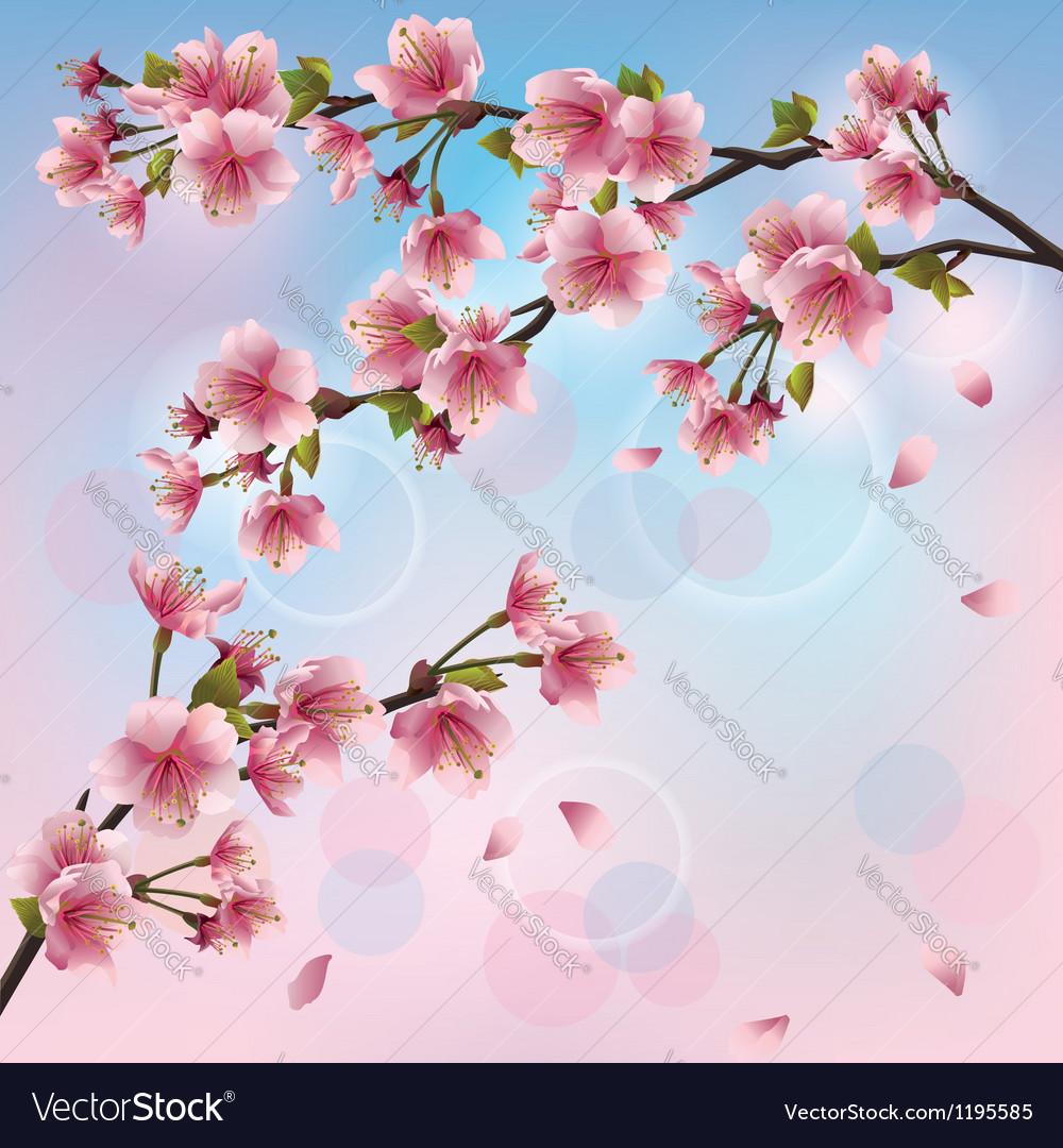 Light background with sakura blossom japanese vector image mightylinksfo