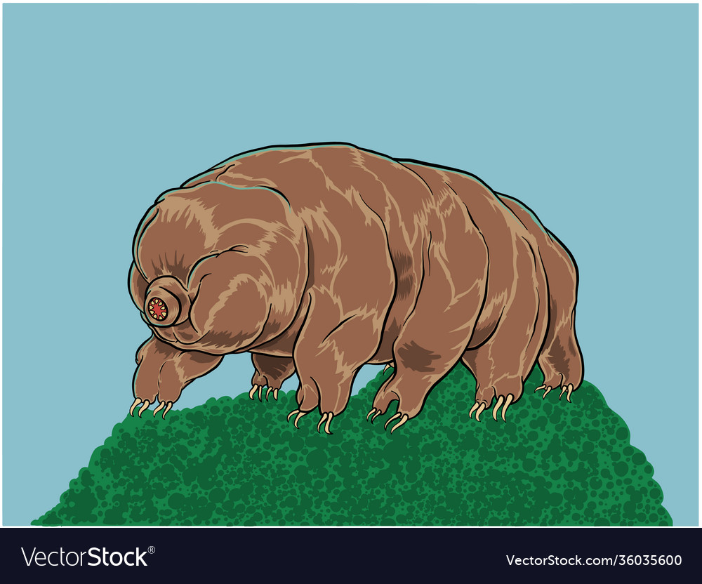 Tardigrade or water bear vector