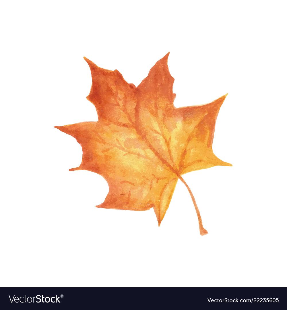 Autumn leaf watercolor texture