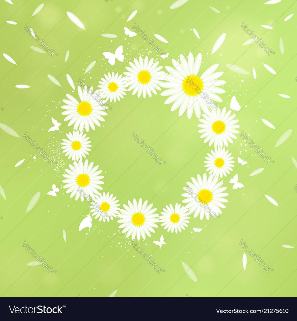Wreath of white chamomiles