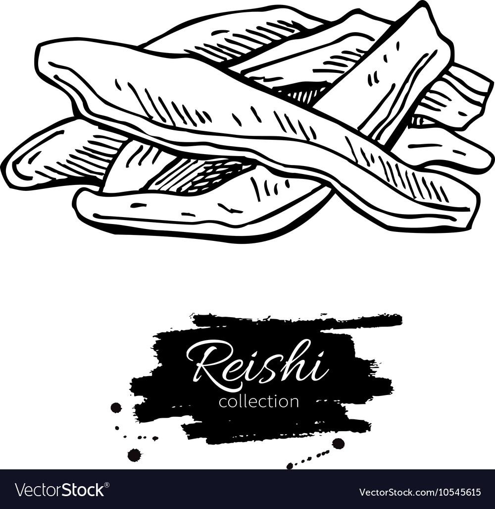 Reishi mushroom superfood drawing Isolated