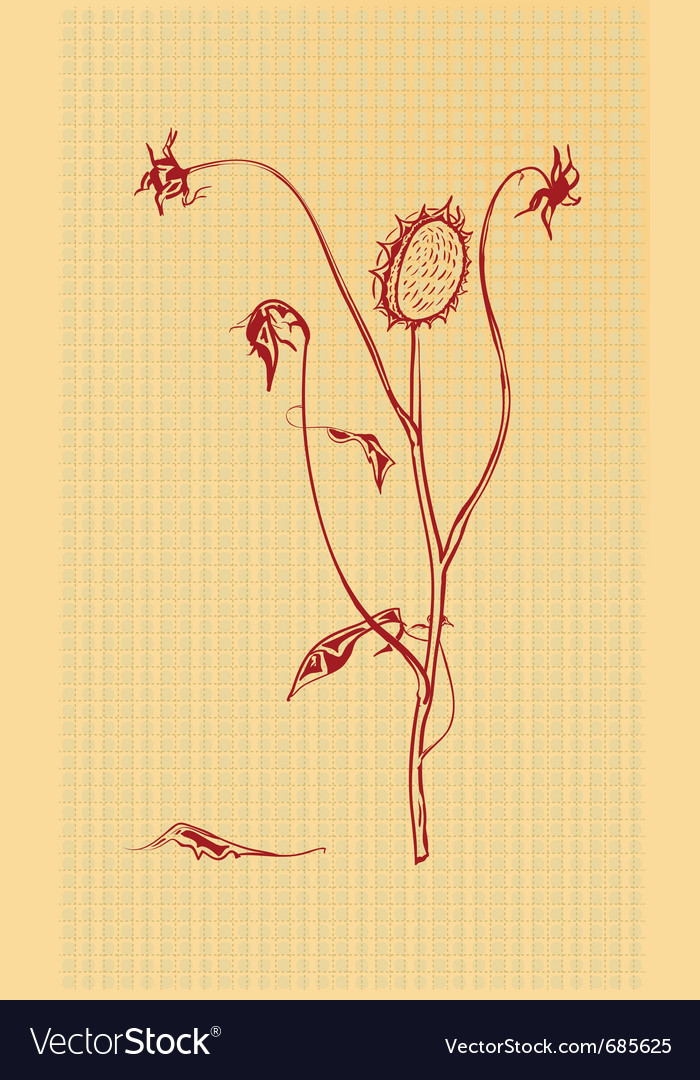 Dried flowers vector image