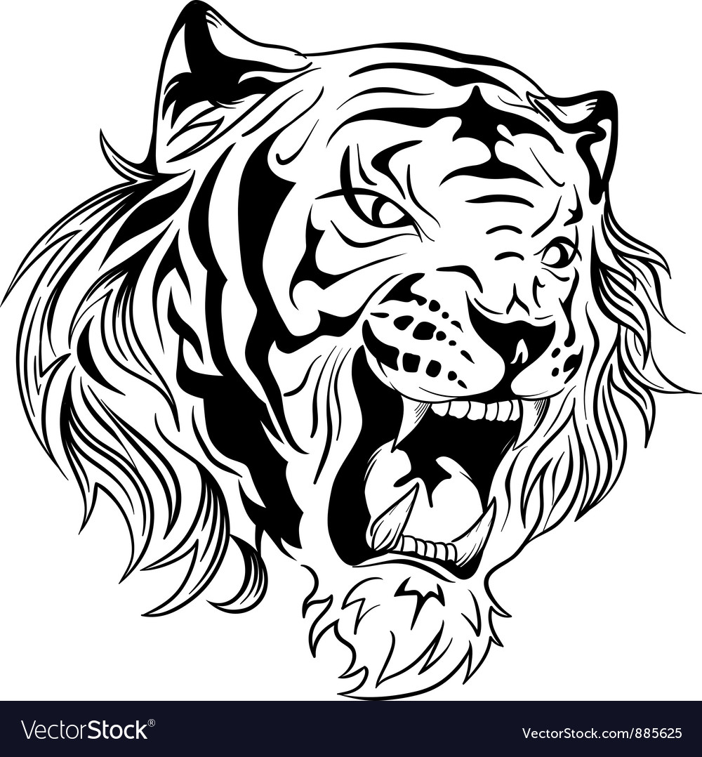 tiger royalty free vector image vectorstock rh vectorstock com tiger vector free download tiger vector free download