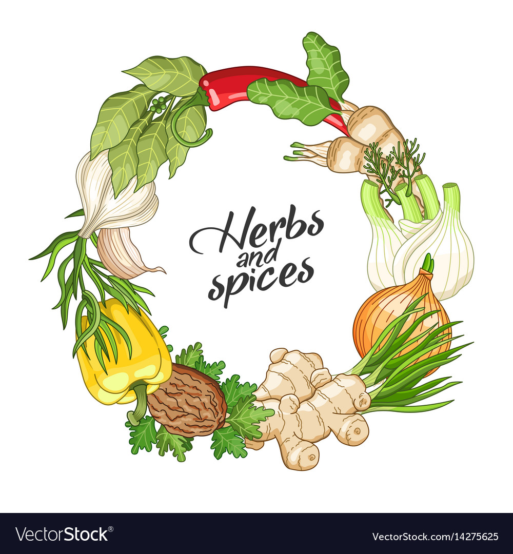 vegetable circle template with spices royalty free vector