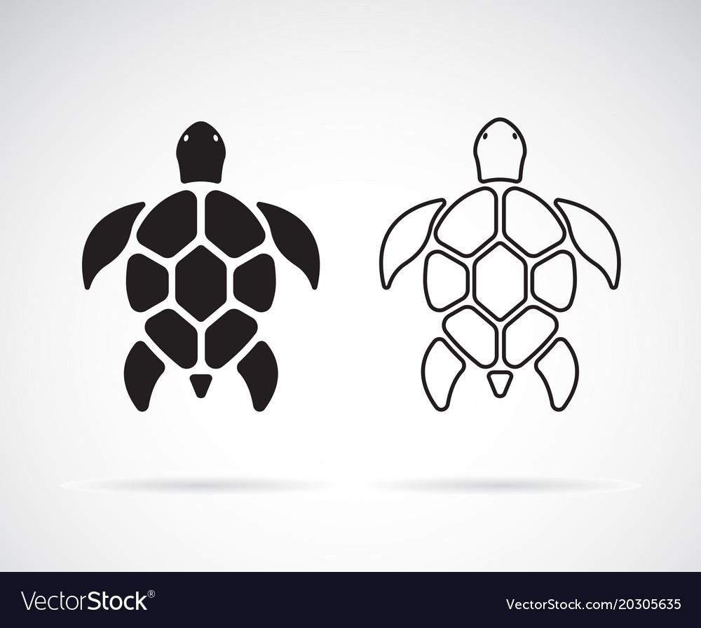 Turtle design on a white background reptile