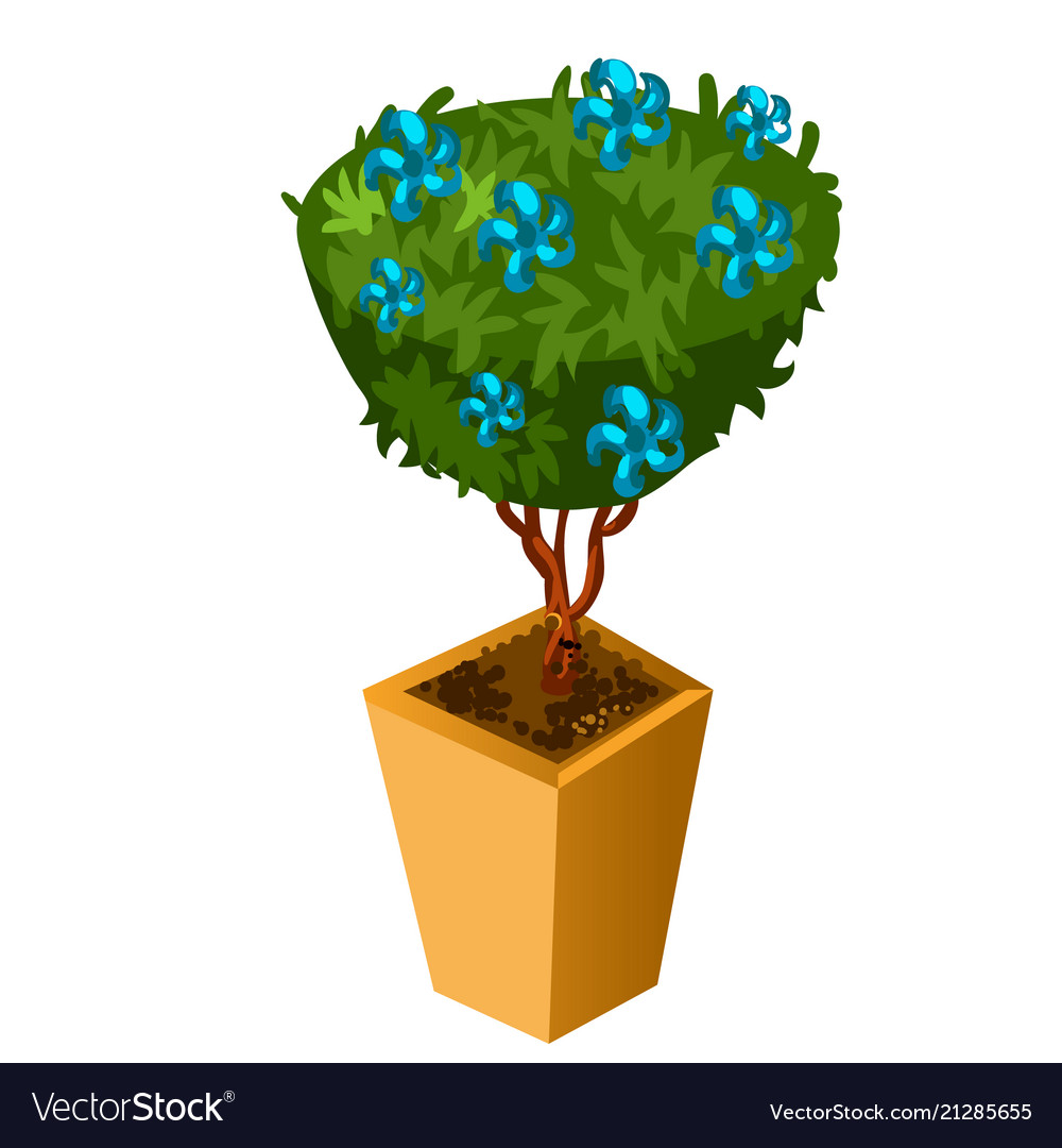 Bonsai With Blue Flowers Isolated On White Vector Image