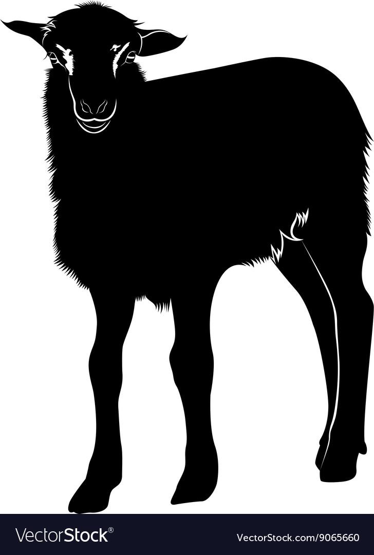 Farm animals lamb vector image